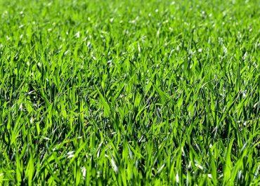Pierwsze koszenia trawy już za nami